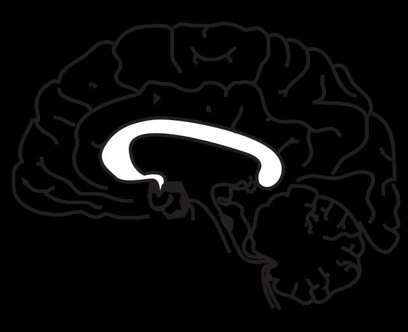 Brain Anatomy Coloring Page | Brain | Pinterest | Brain anatomy and ...