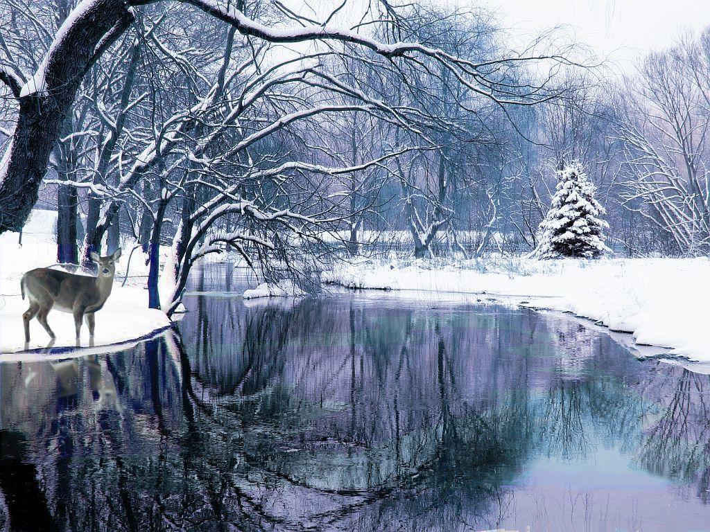 Winter Beautiful Winter Scenery Winter Scenes Scenery Wallpaper