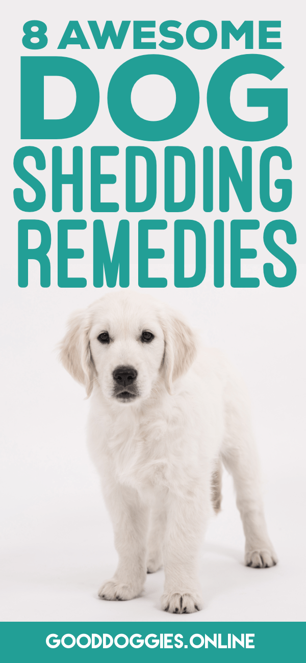 How To Trim Dog Nails That Are Overgrown Dog Shedding Remedies Dog Shedding Dog Remedies