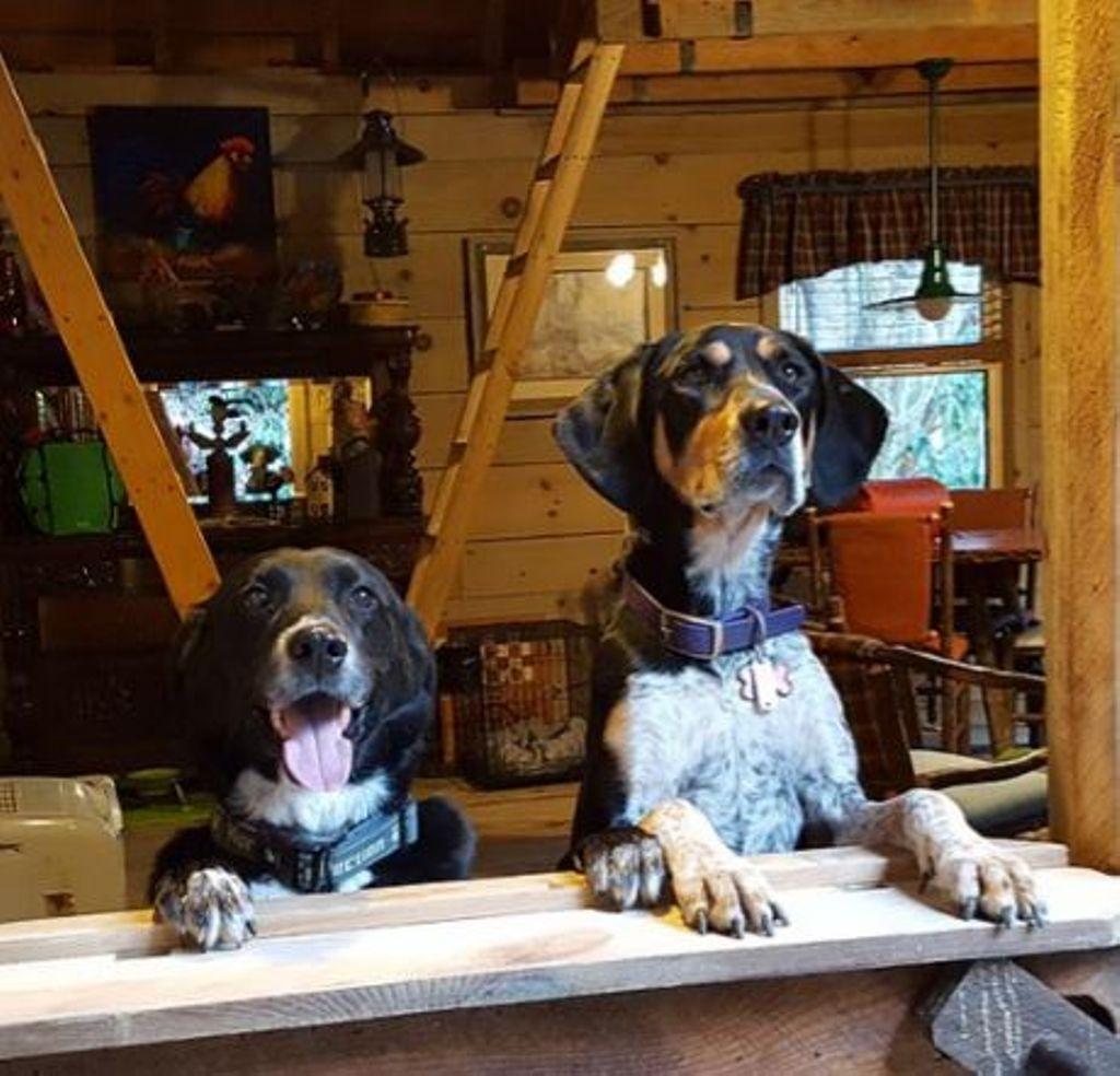 Glamping hub dog friendly vacation camping near me