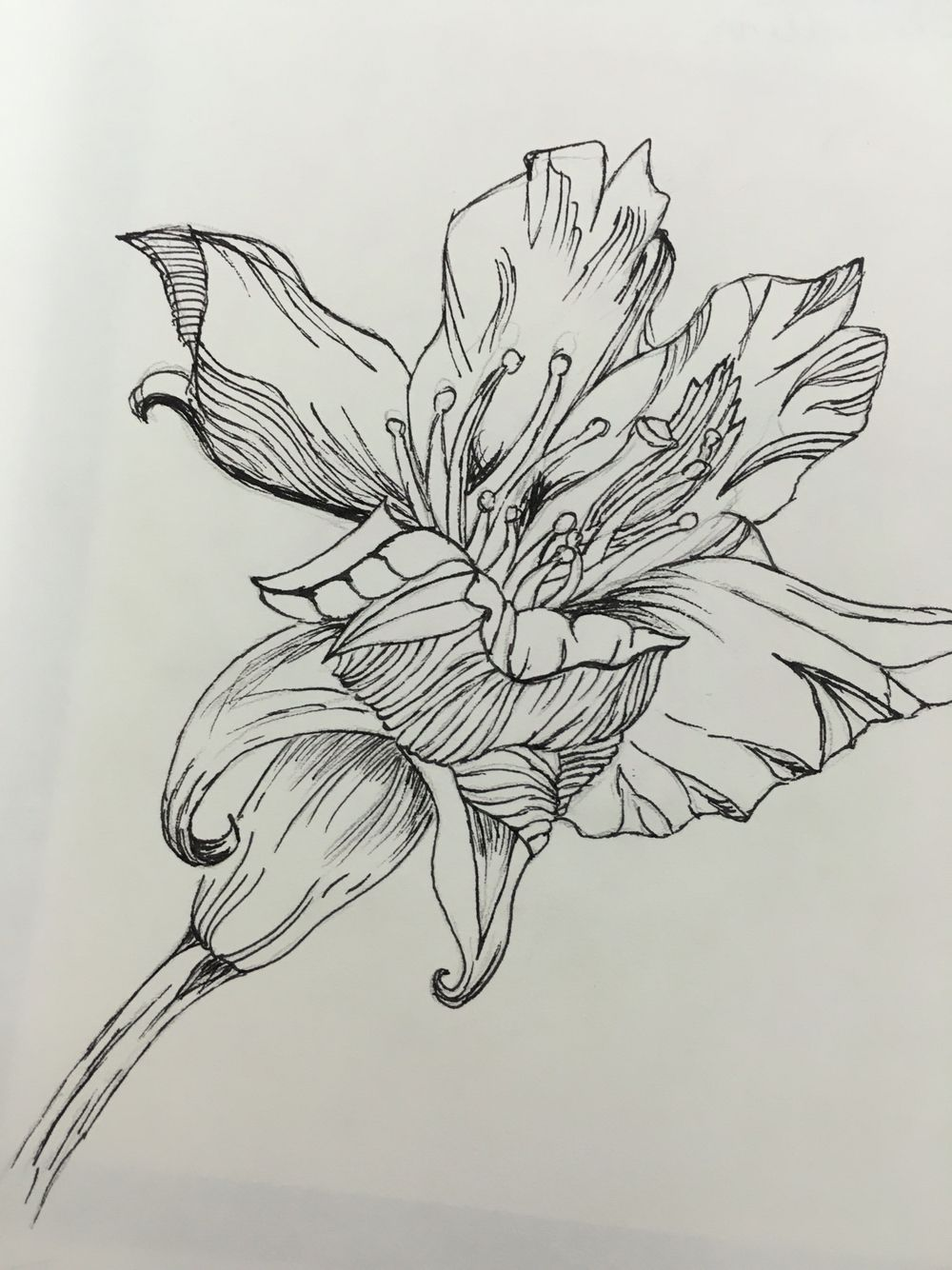 Fineliner drawing of a flower | drawing examples | Pinterest ...