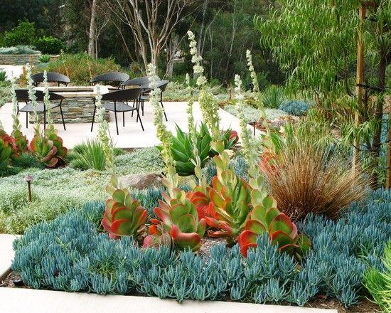 Landscape Desert Modern Architecture Design Pictures Remodel Decor And Ideas Page 4 Succulent Garden Design Landscape Design Succulent Landscaping
