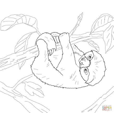 image result for free printable sloth masks to color