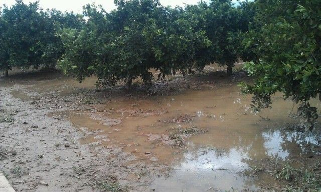 """Asaja Murcia considera """"muy beneficiosas"""" para los cultivos hortofrutícolas pero """"insuficientes"""" las lluvias caídas"""