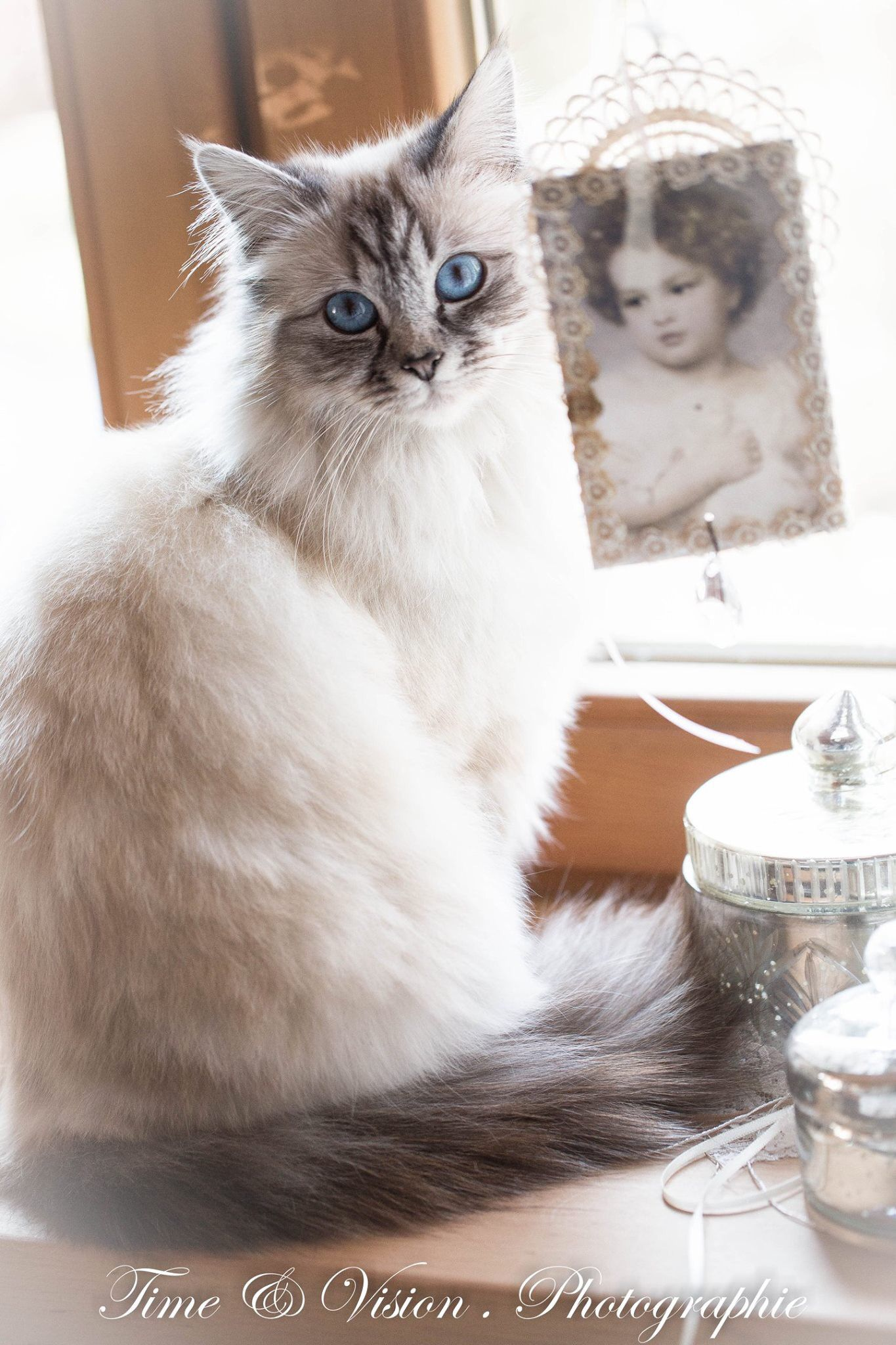 miss Pollyanna's Place image by Tonya Cats, Animals