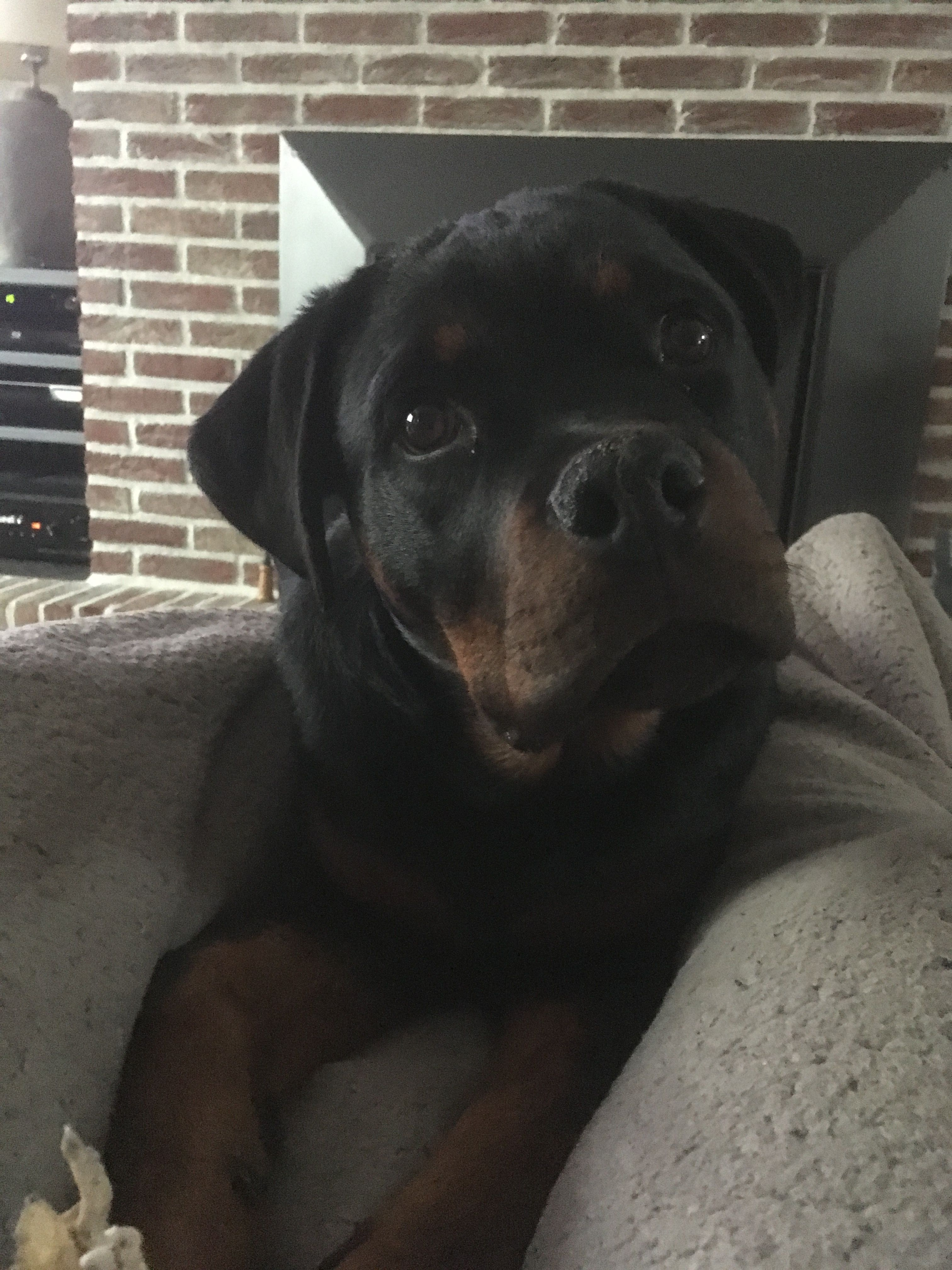 Pin By Linda Burnett On Rotties Dogs Happy Dogs Rottweiler Puppies
