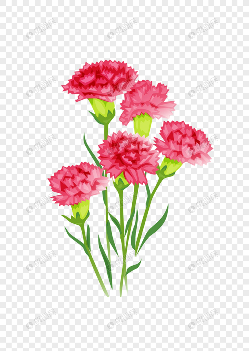 Carnation Carnation Carnation Flower Hand Painted Carnation Cartoon Carnation Flower Material Carnation Material Web App Design Template Design Vi Design