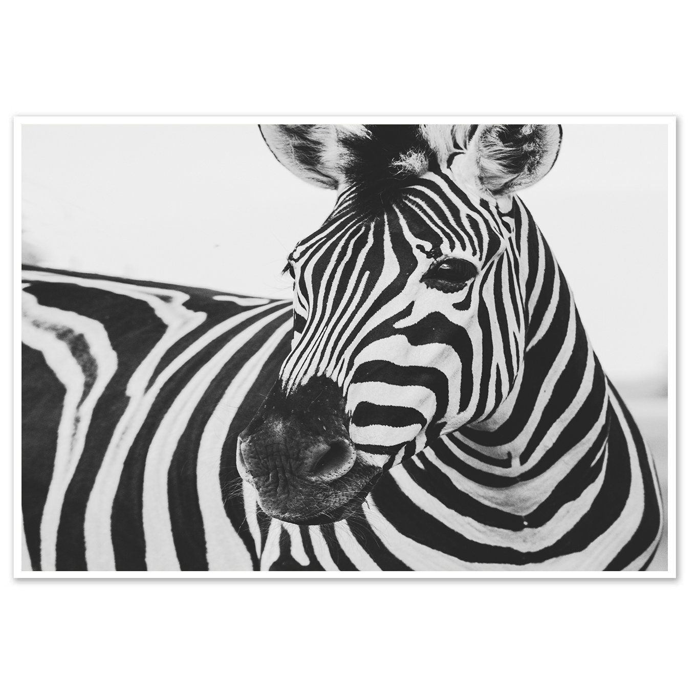 Zebra Wall Art Print Animals Art Print Black And White