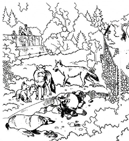 Wolves And The Other Wild Animals In A Zoo Coloring Pages | coloring ...