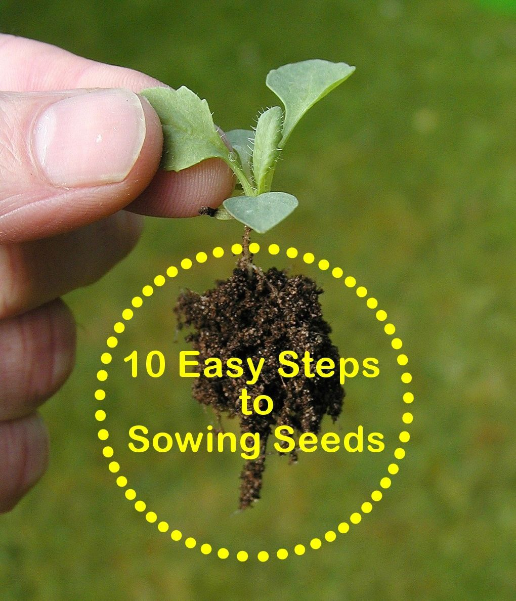 Urban Vegetable Gardening For Beginners: 10 Easy Steps To Sowing Seeds