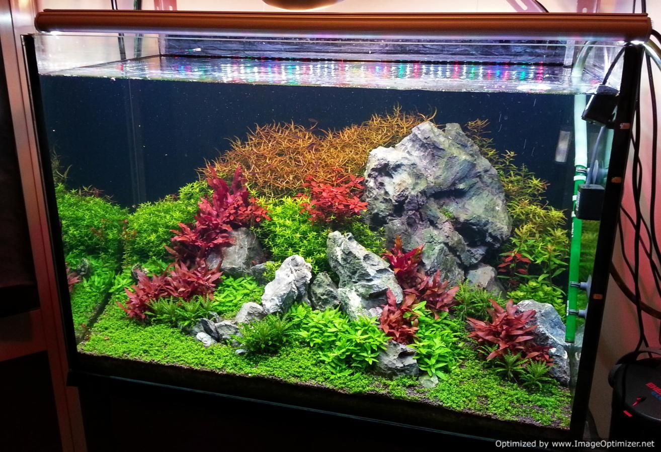 Aquarium fish tank reading - Current Tank That I M Maintaining First Old Post From A Couple Years Back Hello I Have Been Reading The Forum For A Couple Of Years And Find The