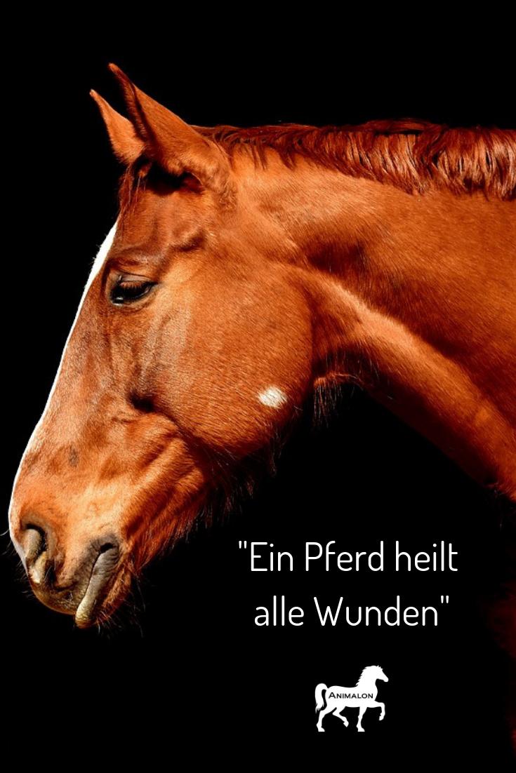 Das Wunder Pferd Pferdespruche Pferde Zitate Pferd