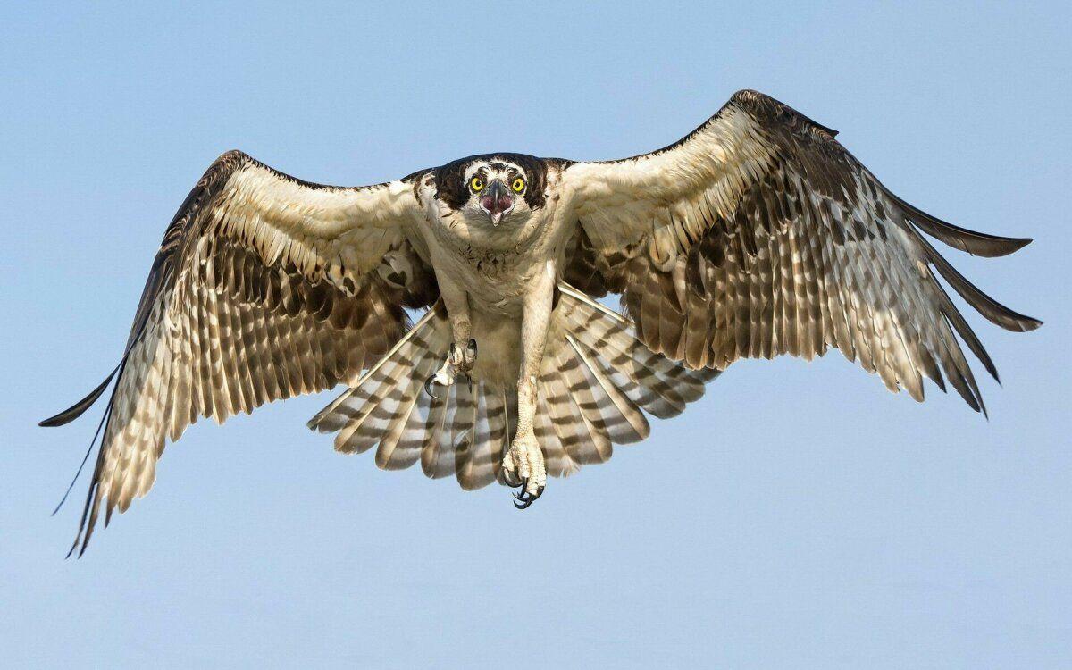 صور صقر صقور Hawk طيور طبيعة 9 Pet Birds Animal Wallpaper Hawk Photos