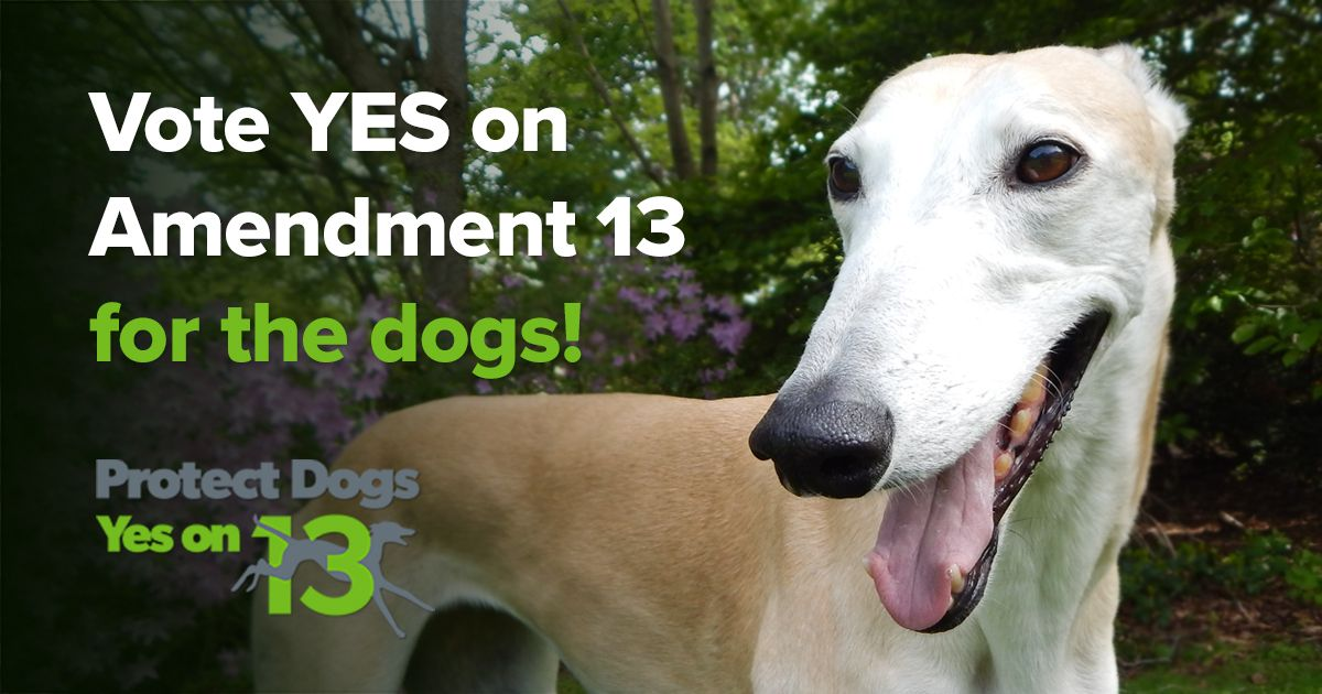 Amendment 13 Will Phase Out Cruel Greyhound Racing In Florida Vote Yes On 13 For The Dogs In November 2018 Greyhound Greyhounds Racing Dogs