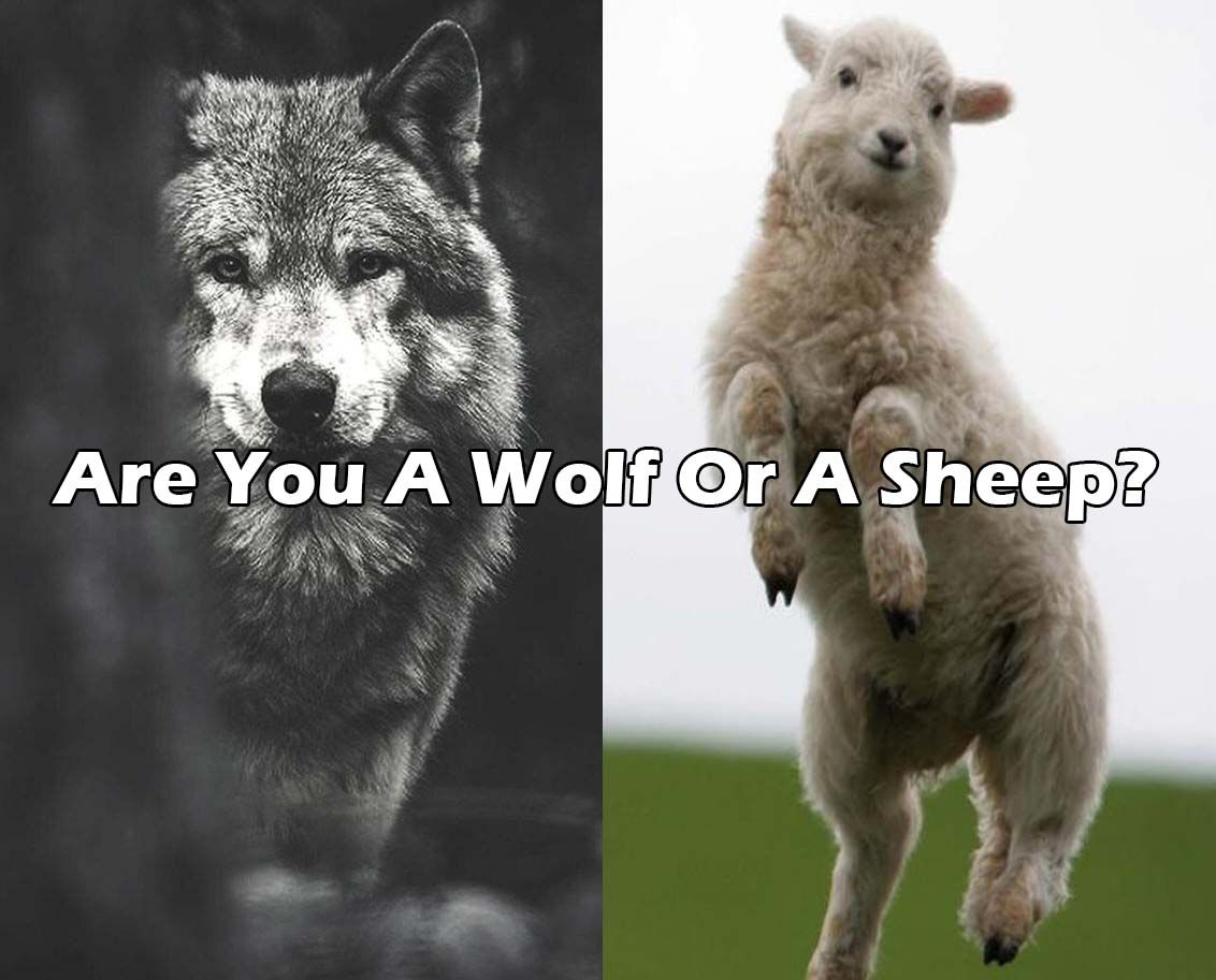 Are You A Wolf Or A Sheep? | quizzes | Animal quiz