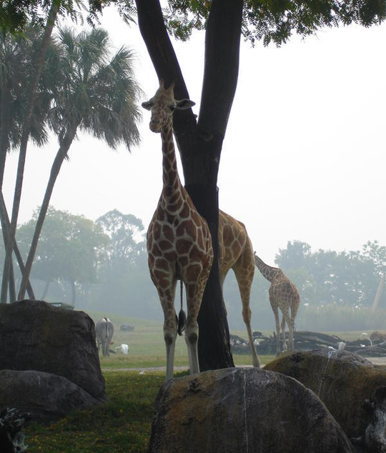 Tree Splitting Giraffe In Half PerfectlyTimed Photos - 25 perfectly timed animal photographs
