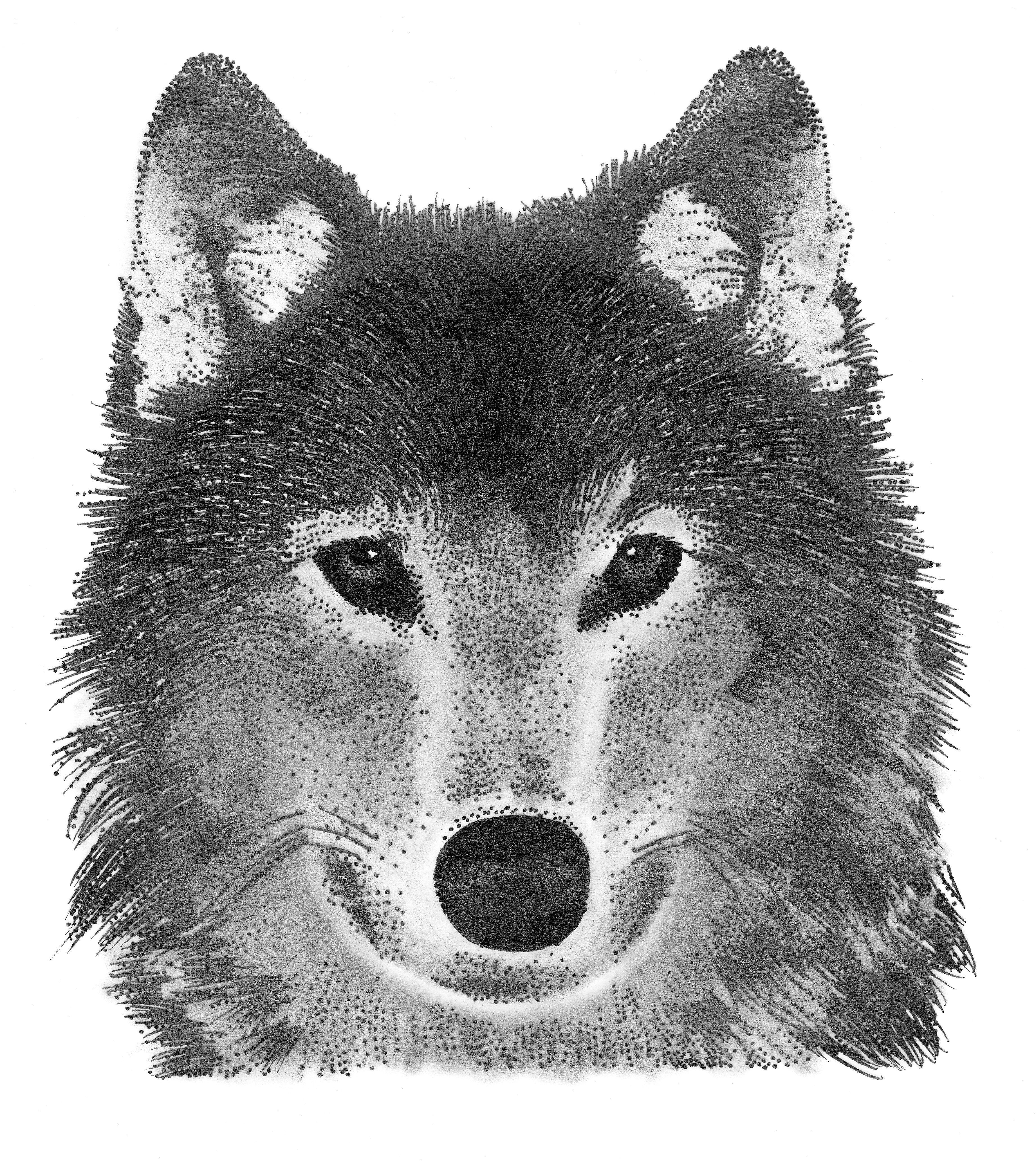 Wolf Гјbersetzung