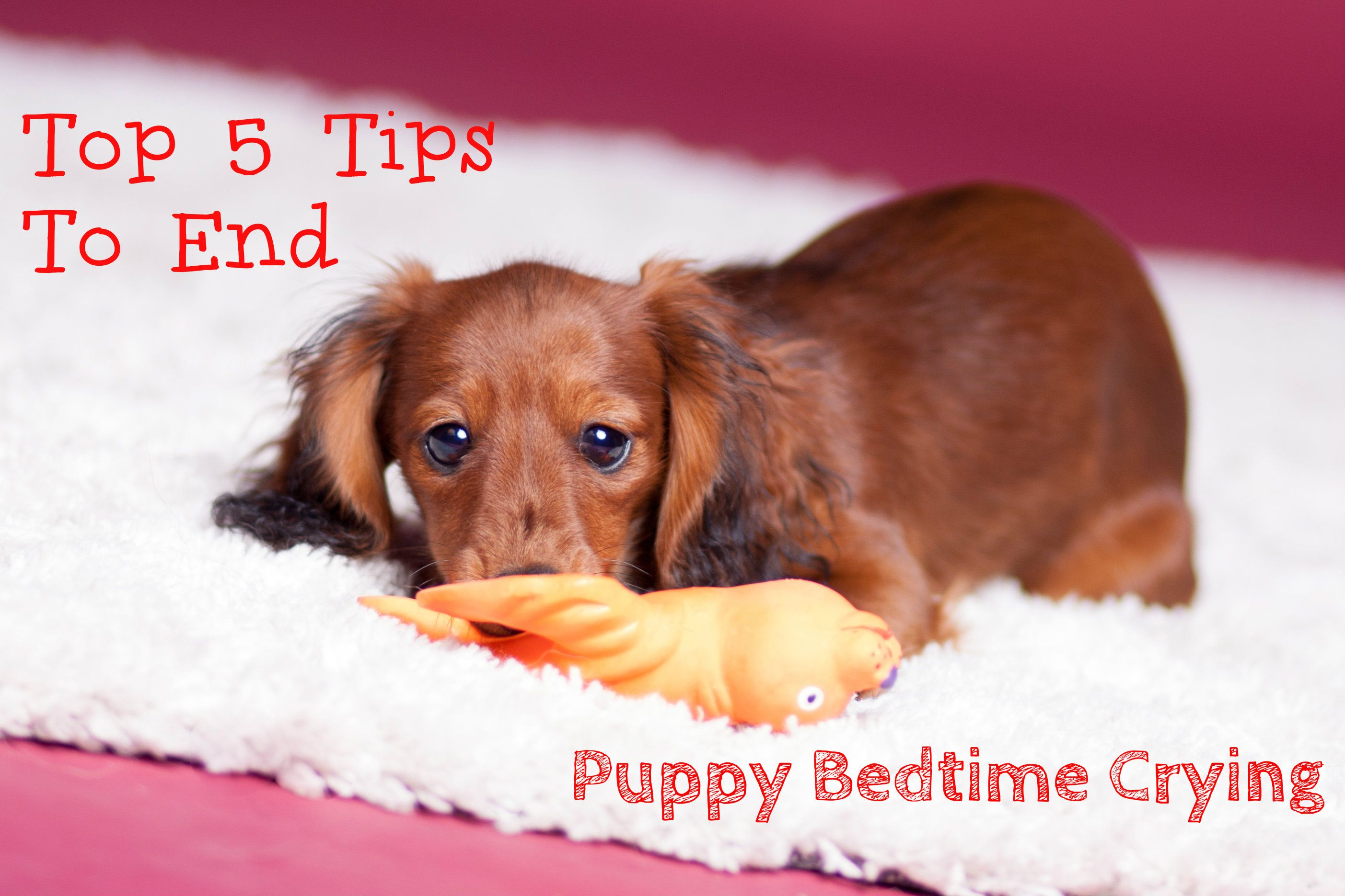 Moving house is a stressful experience, especially the first time! Here are our top 5 tips to help you stop your new puppy crying at bedtime.