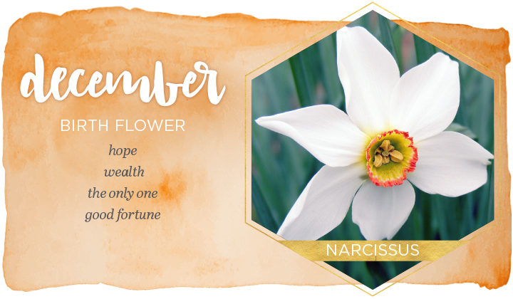 December Birth Flower Narcissus in 2020 Birth