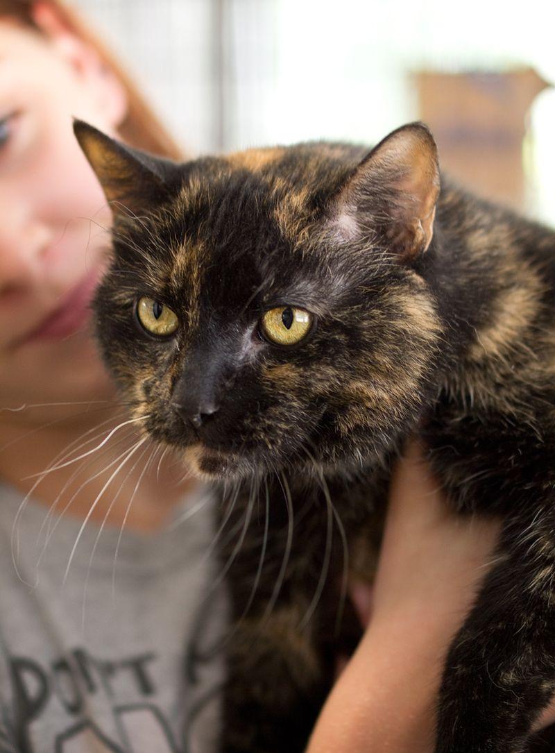 Adopt Ellie on Petfinder Animal shelter, Tortoise shell