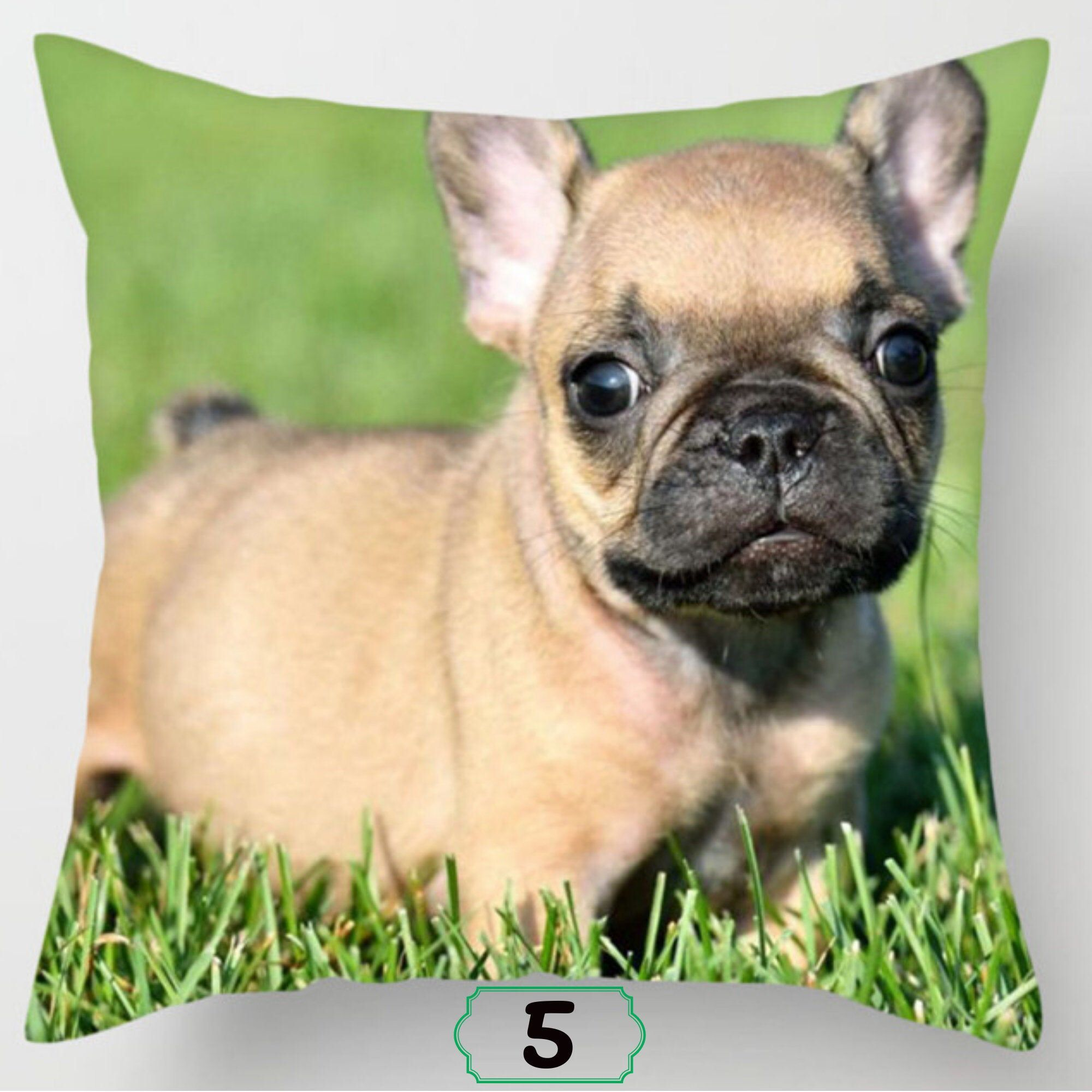 Boston Terrier Puppies For Sale Near Me Craigslist - Free ...