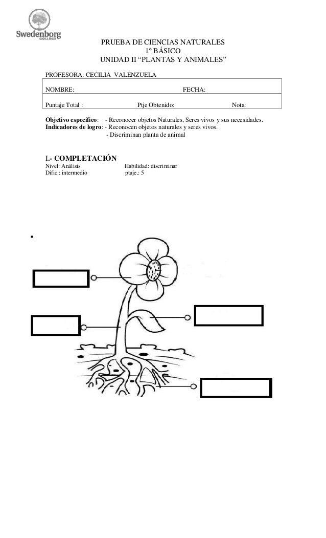 """PRUEBA DE CIENCIAS NATURALES 1º BÁSICO UNIDAD II """"PLANTAS"""