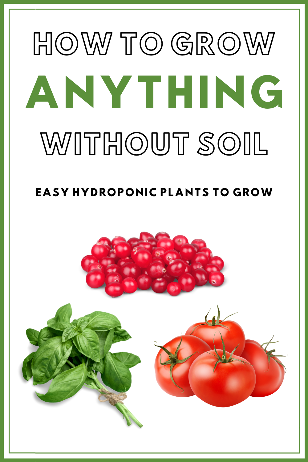 The Best Hydroponic Plants To Grow How To Grow Herbs W O Soil In 2020 Easy Herbs To Grow Hydroponic Plants Best Herbs To Grow