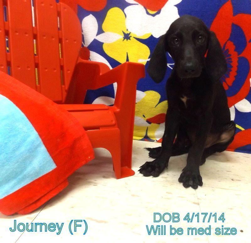 15++ Claiborne county animal shelter ideas