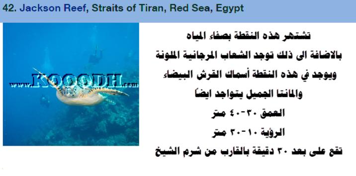 Kooodh أحلى وأفضل 50 مكان للغوص حول العالم Red Sea Egypt Reef