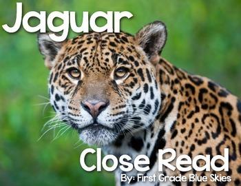 Jaguar Close Read