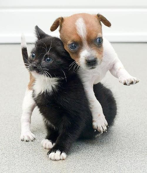 At Just Weeks Old Buttons The Dog And Kitty The Cat Were Both
