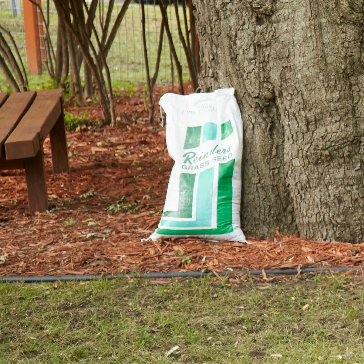 How To Buy Quality Lawn Seed Seeding lawn, Lawn care