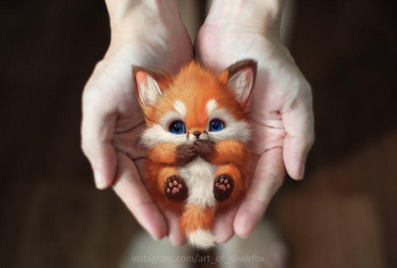 Lil foxie by silverfoxhttpsireddit5c2ye0mmqh231jpg