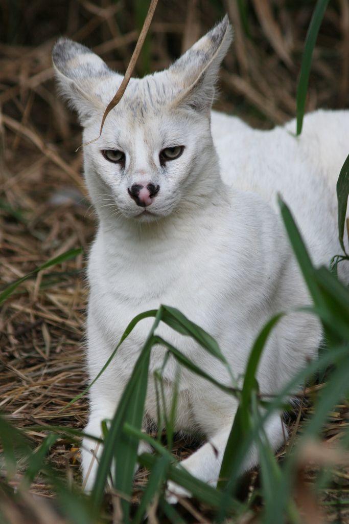 Pin On Cats Wild Felines