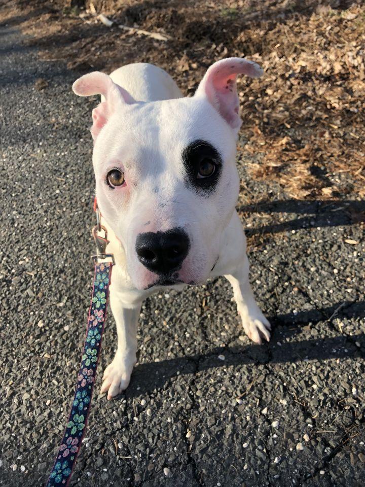 Adopt Quesadilla On Dog Adoption Help Homeless Pets Homeless Pets