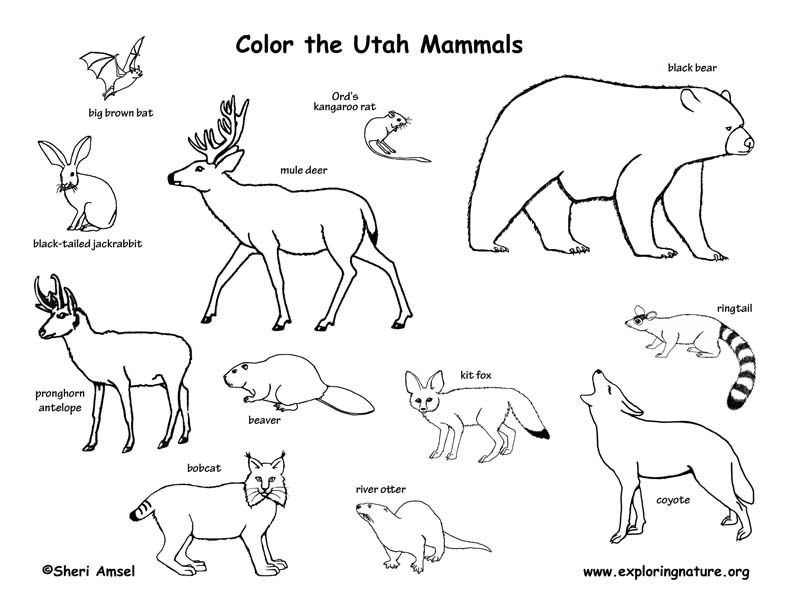 Utah Mammals Coloring Mammals Canadian Animals Animal Coloring