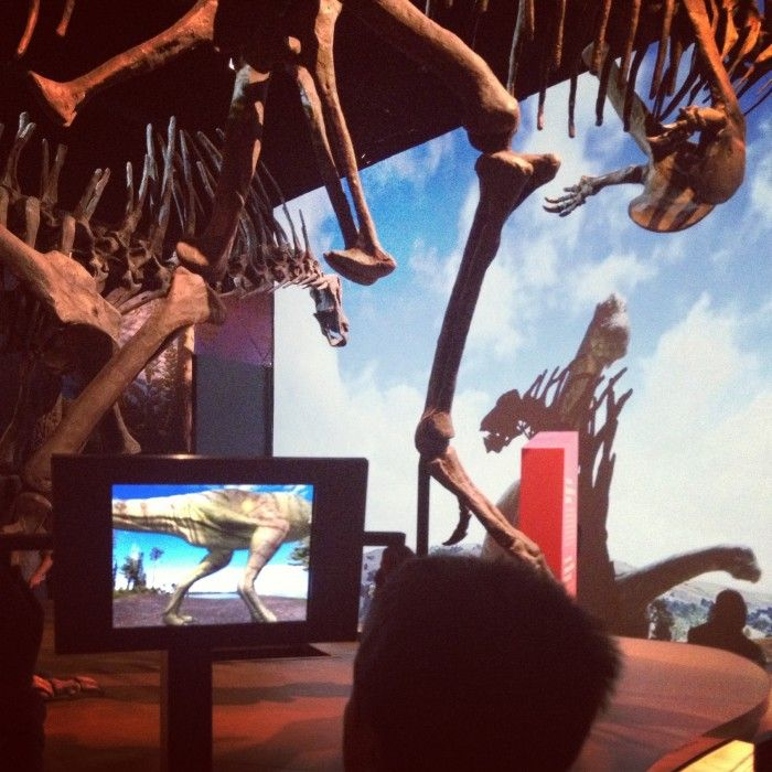 Photo Of Denver Museum Of Nature Science Entry: Ultimate Dinosaurs: Giants From Gondwana