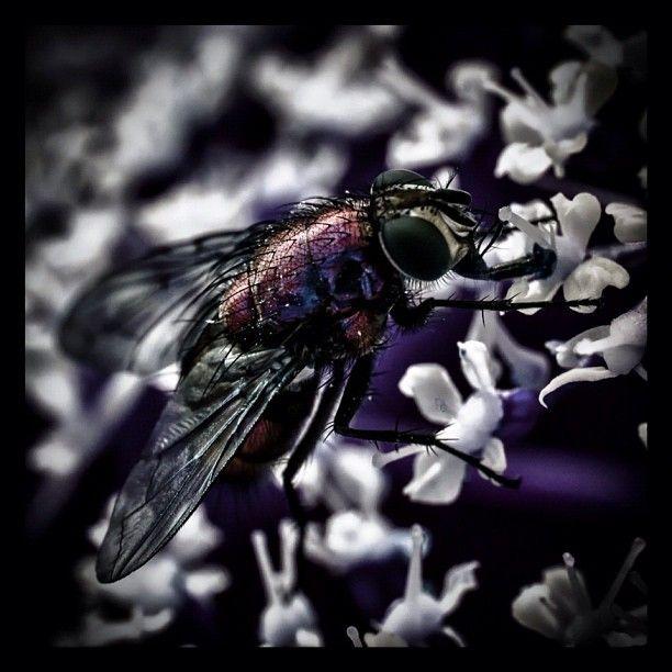 Fly ...