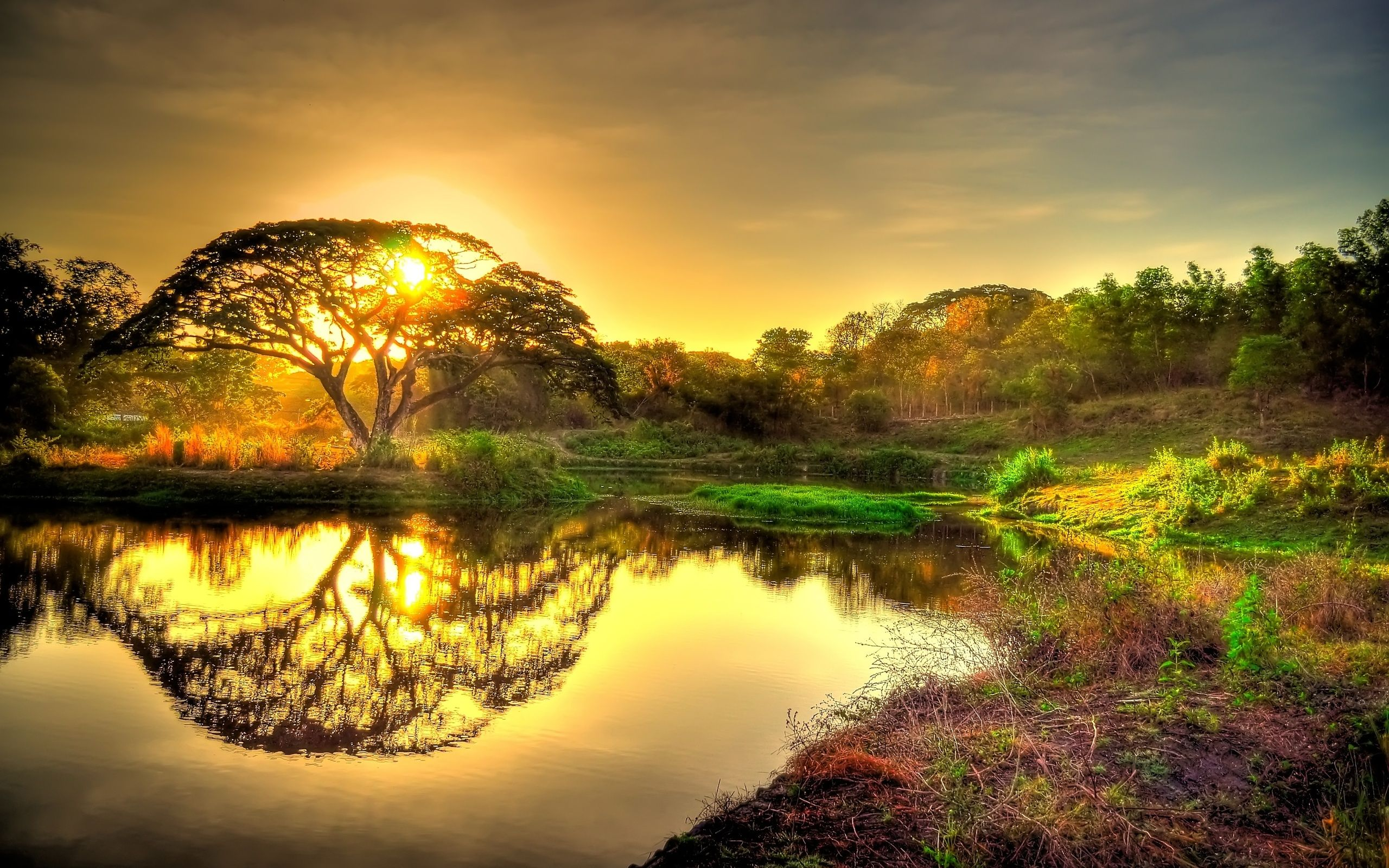 Sun Tree Jpg 2560 1600 Hd Nature Wallpapers Cool Landscapes Landscape Wallpaper