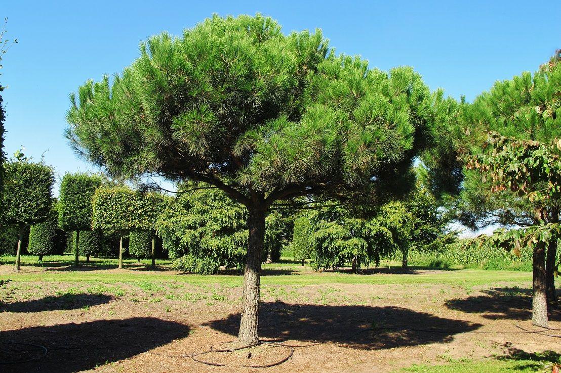 Pin Von Tine Knol Bruins Auf 좋은 작품들 In 2020 Toskana Garten Pflanzen