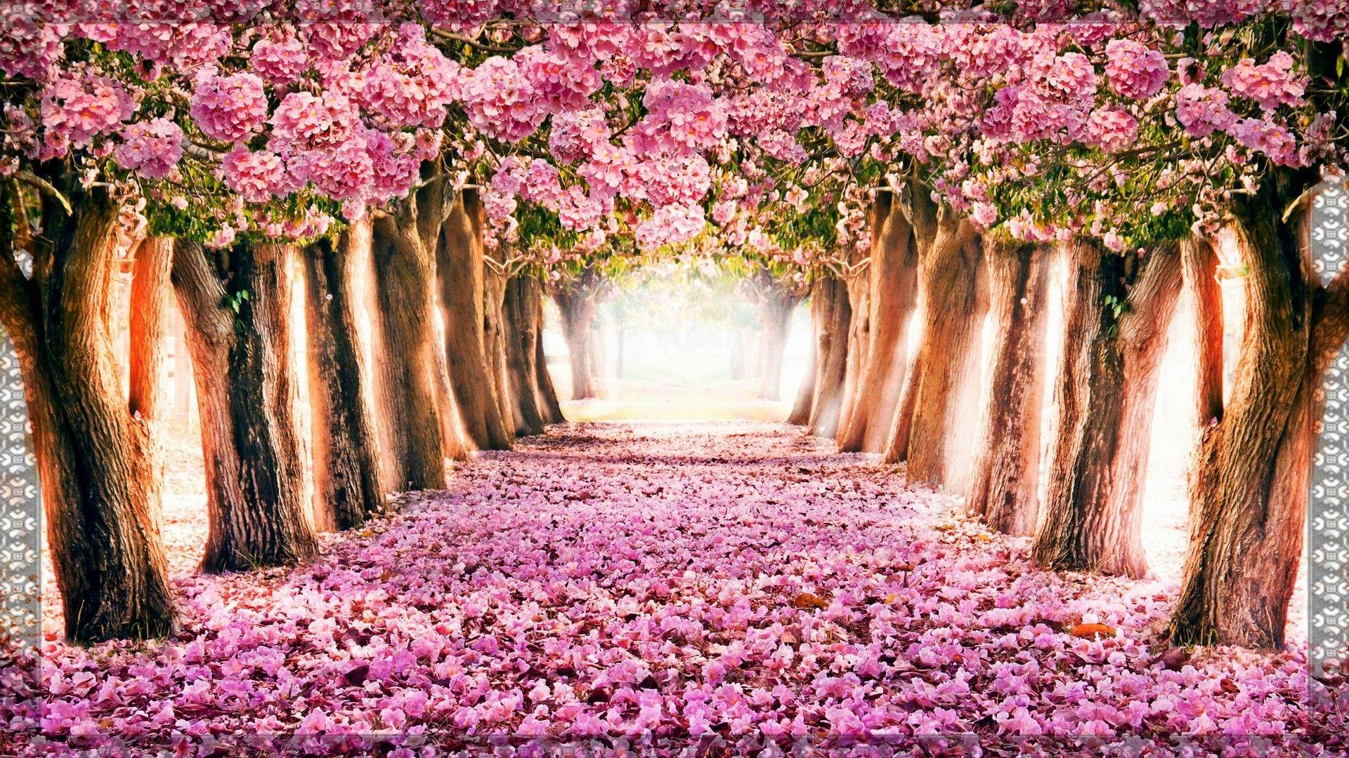 Hello Spring Wallpaper Best HD Wallpapers Cenários de