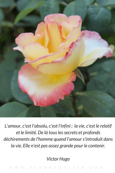 10 Citations Damour Pour La Saint Valentin Littérature
