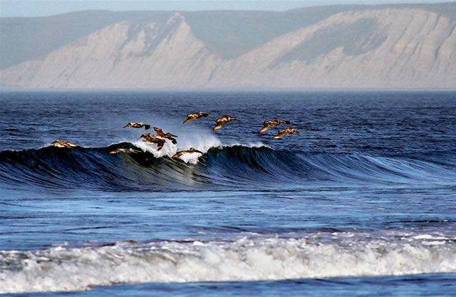 Pelicansbluffs Fs Jpg 640 417 Point Reyes National Seashore Point Reyes California Coast