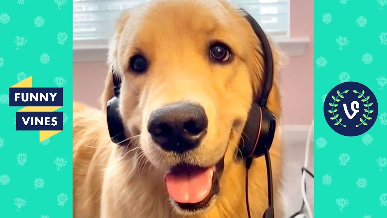 TRY NOT TO LAUGH - Funny Animals to Make You Smile!Hello everyone! We know the quarantine life can be boring. That's why we're here to bring you some joy with a funny animal video! Enjoy these cute and... #animals #animalsfunny #animalsquotesfunny #cat #catsanddogs #cutefunnyanimals #dogcat #DOGS #dogsfunny #funny #funnyanimals #funnyanimalsmemes #funnyanimalsquotes #funnyanimalsvideo...