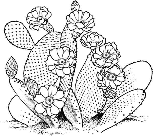 Blossom Cactus Flower Coloring Pages 600x532 Jpg 600 532