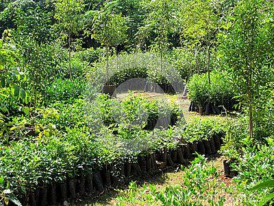 This is a tree nursery in Tiruvannamalai Tamil Nadu South India