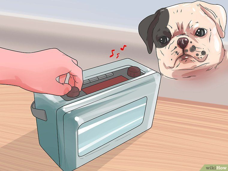 Pin On Living With A Blind Dog