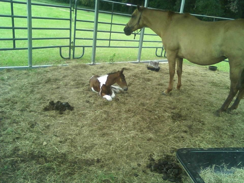 Daughter's horse Jahala and new baby...