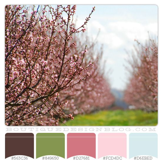 wonderful pink green living room color schemes | Cherry Trees color scheme with pink, green, brown & blue ...
