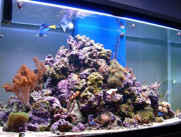 Like the pyramid idea for organizing live rock saltwater for Live saltwater fish